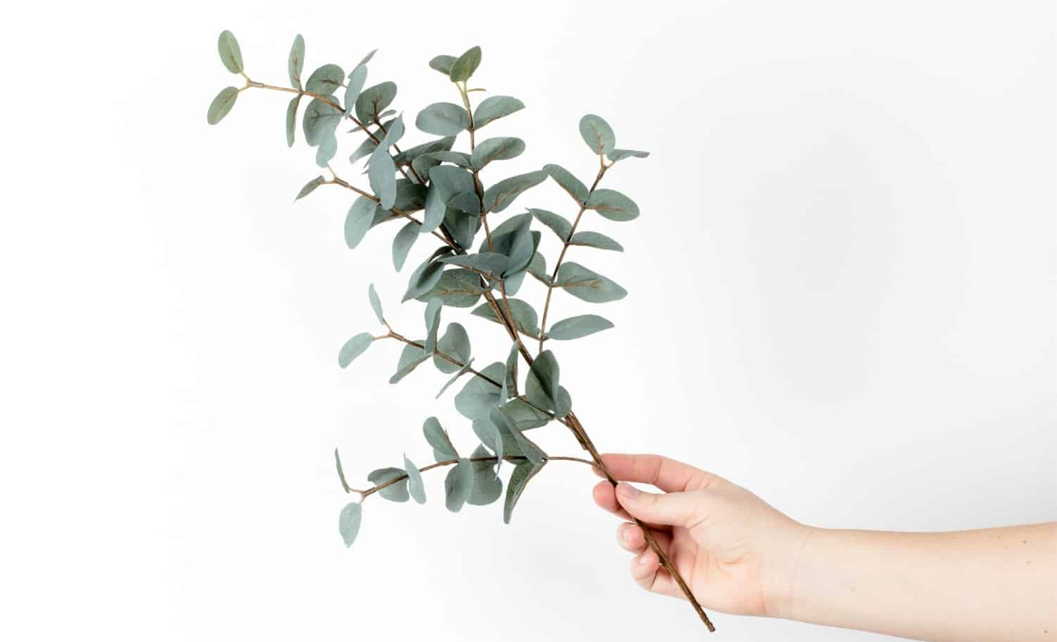 Organic Eucalyptus – is Eucalyptus really sustainable?
