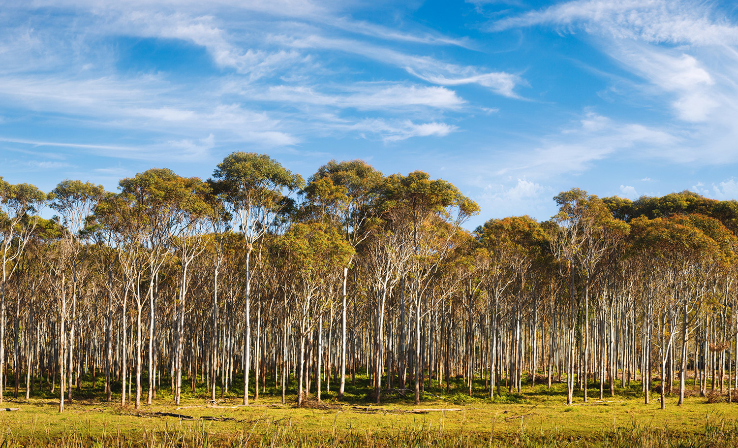 Eucalyptus Vs. Cotton – Why Eucalyptus is the Fabric of the Future?