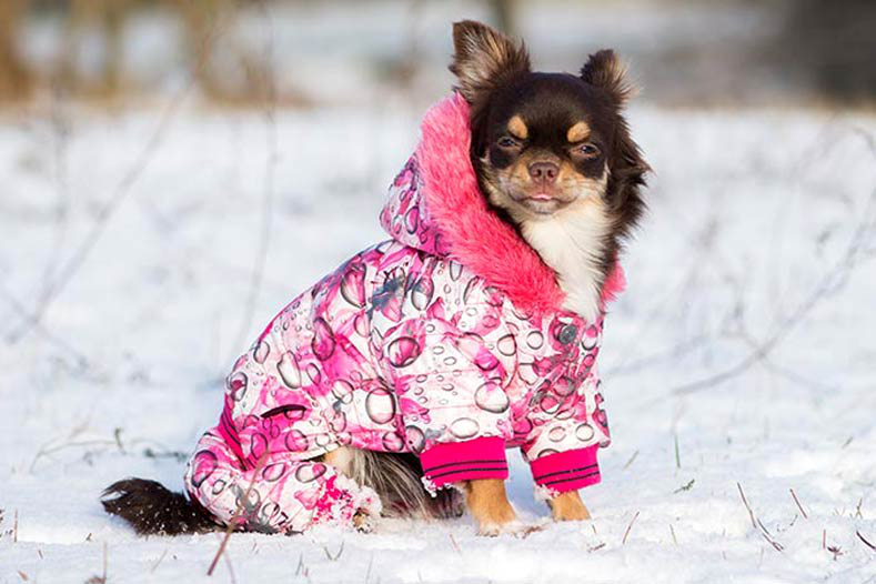 Does dog need a coat in winter