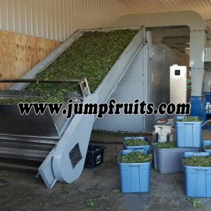 Fruits and vegetables drying and packing whole line
