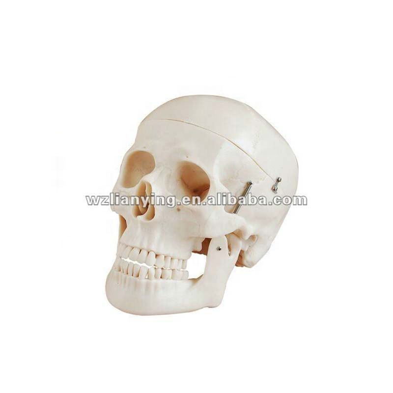 Miniature Plastic Skull For Sale