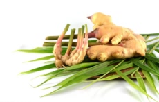 Good price china wholesale new crop fresh ginger  (2)