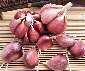 WIDE VARIETY OF GARLIC FARM PRODUCTS, AS RECOMMENDED BY LOCAL FARMERS, NOW AVAILABLE EXCLUSIVELY at AGR FARM STOCKS