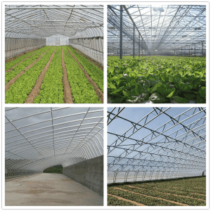Greenhouse Steel