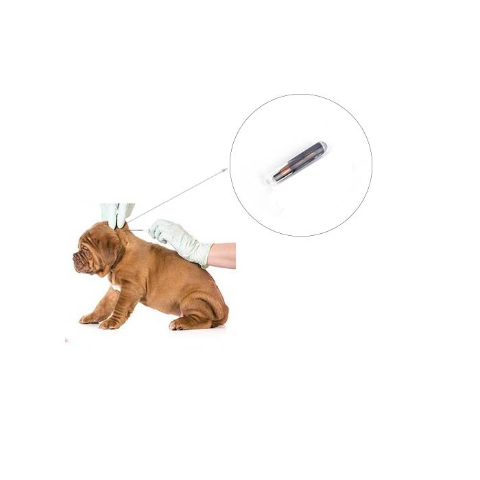 What is RFID pet chip?
