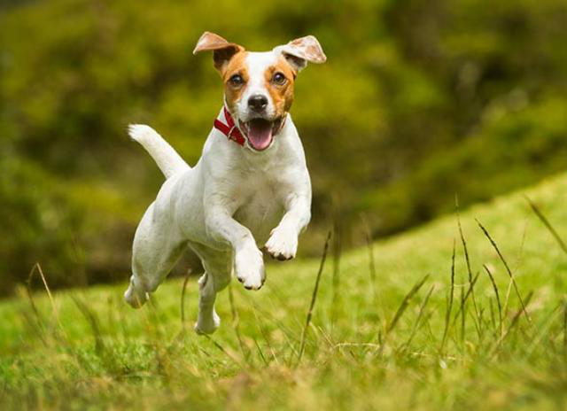 Why are some dogs more hyper than others?