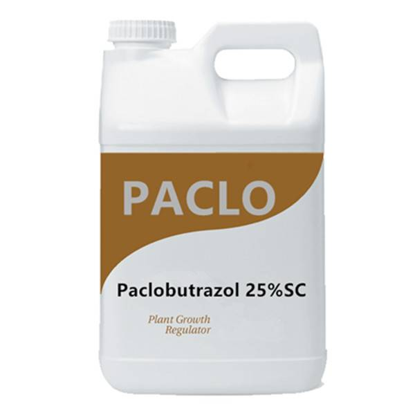 Plant growth regulator Paclobutrazol  25% SC 15% WP in agriculture