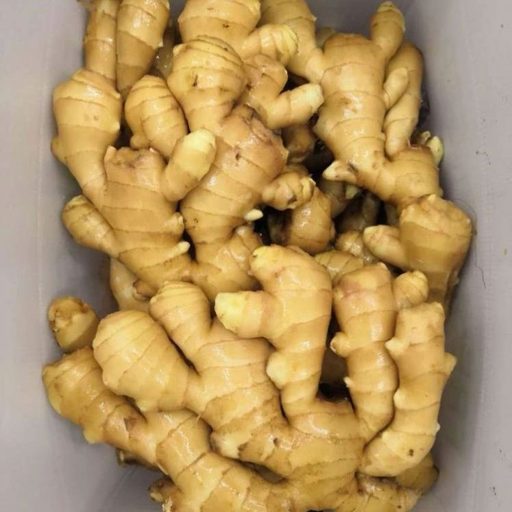 2020 The mighty fresh ginger and it unbelievable health benefits with super quality