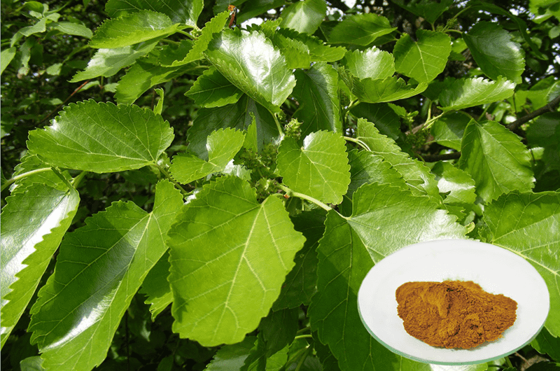 Well-designed Buy Mulberry Leaf Extract - 1-Deoxynojirimycin(DNJ) – Geneham Featured Image
