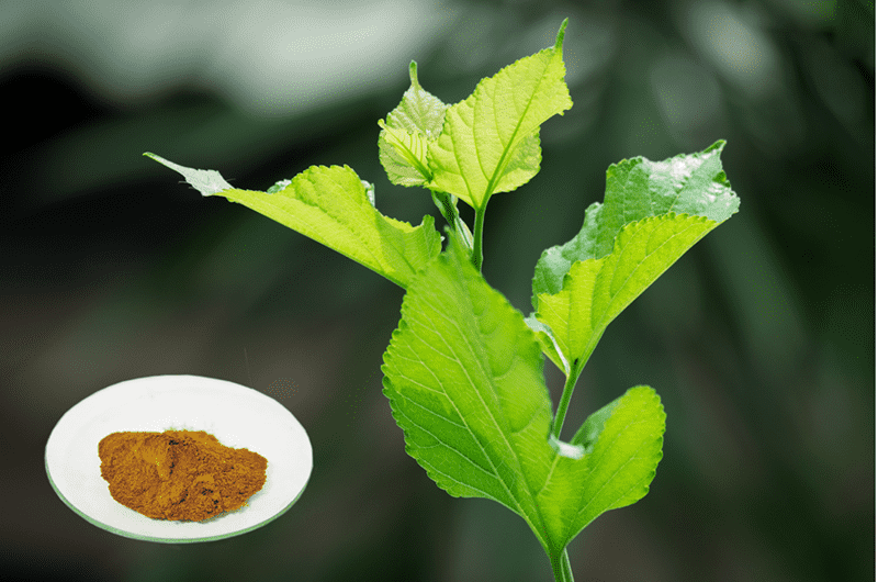 High Performance Mulberry Extract Uses - Mulberry leaf Flavonoids – Geneham