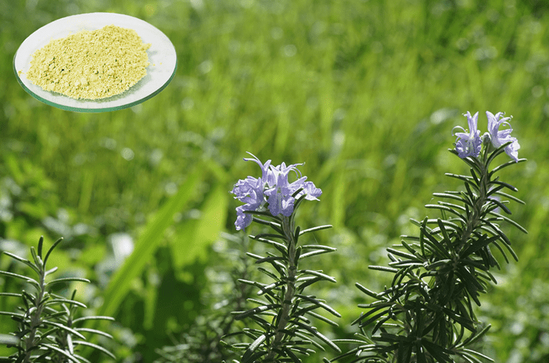 Cheapest Factory Extract Of Rosemary - Ursolic Acid – Geneham