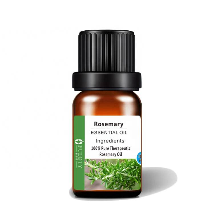Aromatic Plant Rosemary Oil for perfume beauty