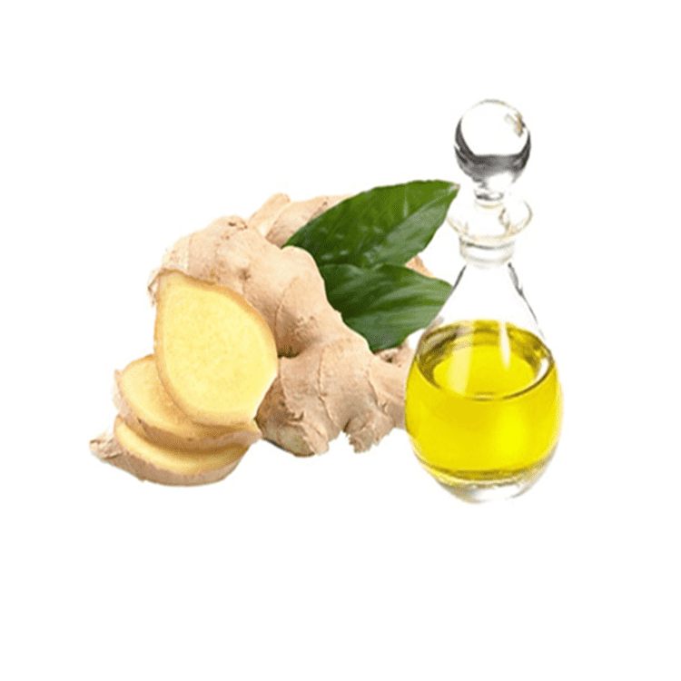 100% pure essential oil natural ginger root oil for massage with best price