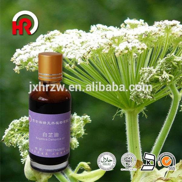 OEM Factory for Natural Turpentine Oil - 100% Herbal Medicine Radix Angelica dahurica oil plant extract – HaiRui