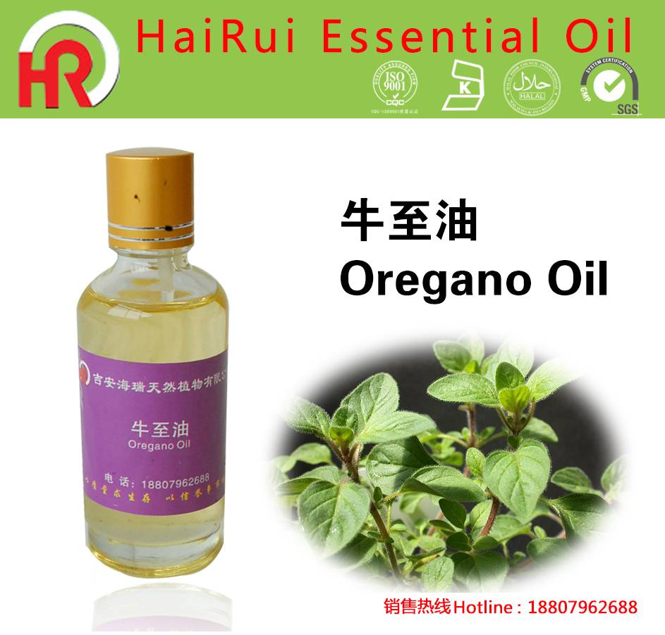 Lowest Price for Star Anise Oil - Free Sample 10ml Wholesale Oregano Oil 90% Carvacrol – HaiRui