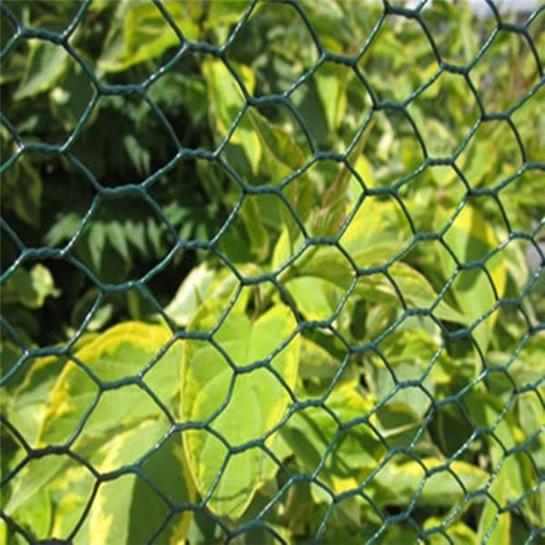 Factory Outlets Hexagonal Wire Mesh - PVC coated hexagonal wire net – XINTELI detail pictures