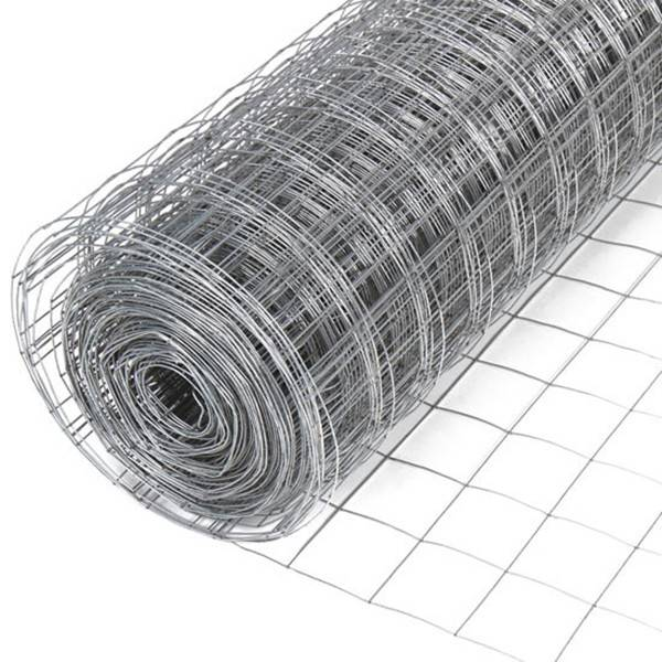 Professional China Plastic Coated Welded Wire Mesh - Galvanized welded wire mesh – XINTELI