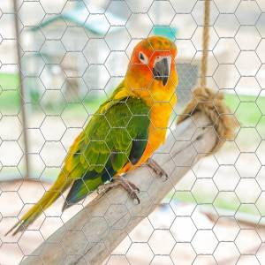 Hexagonal Chicken Wire Netting For Game Bird Flight Pens