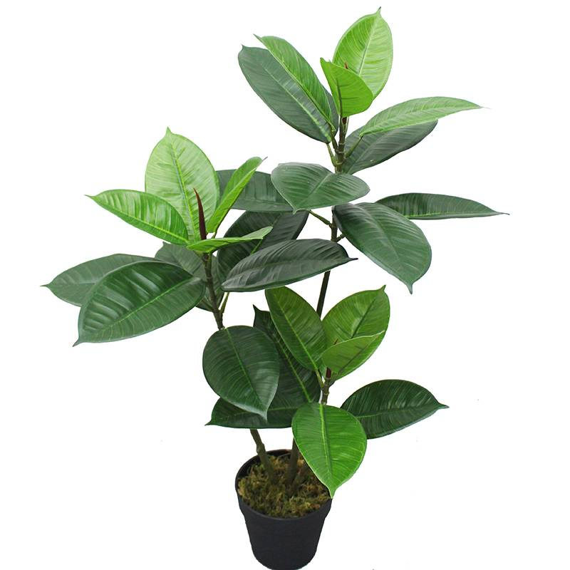 New style artificial rubber tree   real touch leaves for decor Featured Image