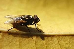 How to Get Rid of Flies Outdoors Step by Step