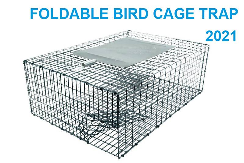 Foldable bird cage trap 2021
