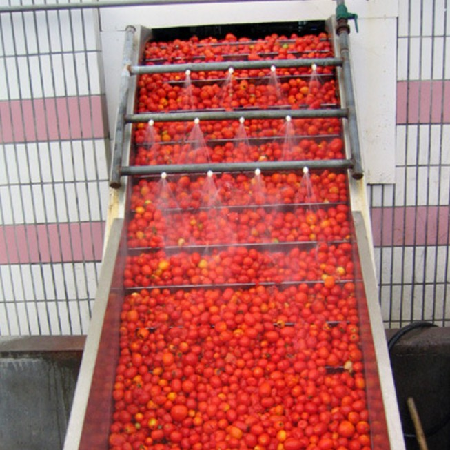 TOMATO PASTE/SAUCE in can/aseptic bag barrel from factory price China Xinjiang tomato plant