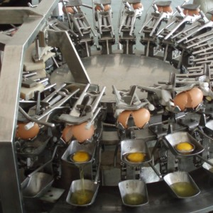 MT-500 Egg breaking machine