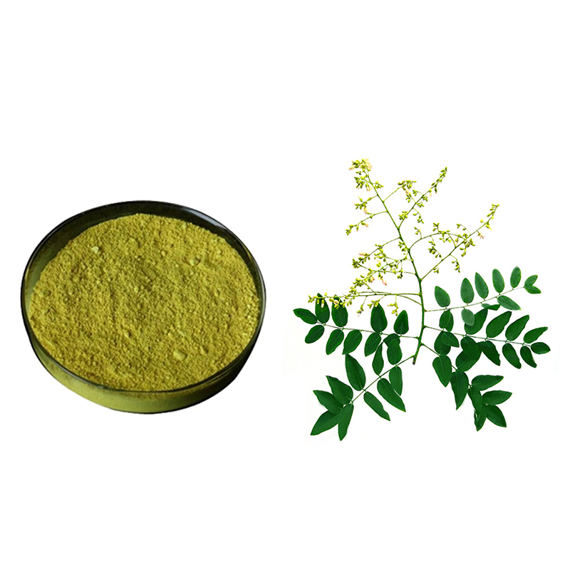 Sophora Japonica Extract Featured Image