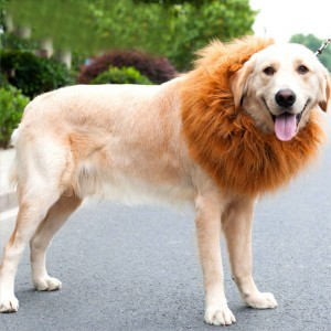 Lion's Head Cover Dog Halloween Cat Transform Toy Interesting Pet Supplies Pet Headgear